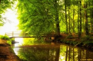 Bos in Berkum, Zwolle