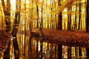 Leuvenumse bos - Herfst